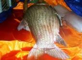 them-ca-ho-khung-110kg-duoc-dua-ve-tphcm-198968.html