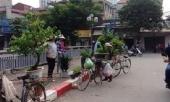 nhung-canh-doi-long-dong-theo-cay-xanh-tren-pho-242182.html