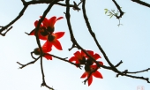 chum-anh-thang-3-mua-hoa-gao-nao-long-nguoi-di-xa-255628.html