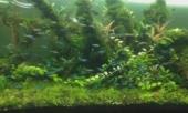 ghen-vi-chong-mai-me-be-ca-bo-quen-gia-dinh-vo-da-co-hanh-dong-tra-thu-khong-ai-ngo-toi-260681.html