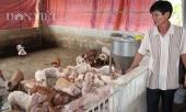 gia-lon-hom-nay-267-dong-nai-con-33000-dkg-gia-lon-giong-tang-vun-vut-271948.html