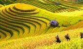 lac-loi-trong-thung-lung-lua-chin-trang-le-nhat-lao-cai-273529.html