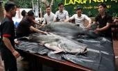 cap-thuy-quai-200-kg-xuat-hien-gay-xon-xao-da-nang-276148.html
