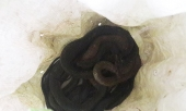 ke-xau-khung-bo-gia-dinh-1-phong-vien-bang-ran-276348.html