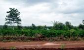 ngoai-tinh-roi-co-thai-me-nhan-tam-giet-con-moi-de-282853.html