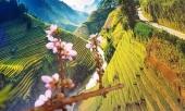 anh-du-xuan-tren-cung-duong-mu-cang-chai-292894.html