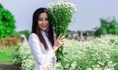 cuc-hoa-mi-chom-no-phu-sac-trang-tinh-khoi-goi-dong-ve-316901.html