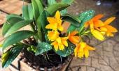 nhung-cay-canh-de-trong-nha-vua-may-man-vua-tot-cho-suc-khoe-323624.html