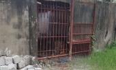 vu-ho-cat-dut-lia-2-tay-nguoi-dan-ong-chuong-nuoi-nhot-qua-so-sai-332985.html
