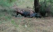 dieu-tra-vu-nguoi-dan-ong-duoc-phat-hien-chet-chay-sau-vuon-nha-338770.html