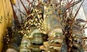 gia-giai-cuu-tom-hum-tang-manh-349567.html