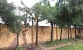 nam-hoc-sinh-lop-9-o-hai-duong-tu-vong-do-dien-giat-trong-khi-lao-dong-tai-truong-355647.html