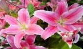 thap-huong-bang-hoa-ly-la-dai-ky-day-moi-la-5-loai-hoa-nen-bay-len-ban-tho-de-gia-chu-may-man-359463.html