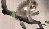tu-vi-3-thang-cuoi-nam-3-con-giap-duoc-phuc-tinh-chieu-menh-co-van-may-loi-nguoc-dong-362260.html