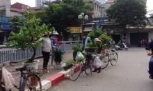 Những cảnh đời long đong theo cây xanh trên phố