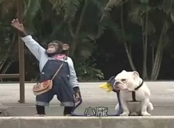 Video hài hước (P72): Cặp đôi hoàn ảnh khỉ và chó đi xe bus
