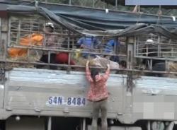 Đổ xô mang bao tải ra 'hôi dưa' ở cửa khẩu Tân Thanh