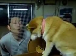 Video hài chú chó chảnh nhất thế giới