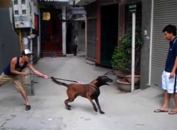 Video huấn luyện chó từ trạng thái vui vẻ chuyển sang hung dữ