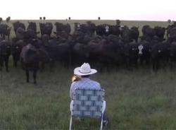 Video đàn bò yêu âm nhạc