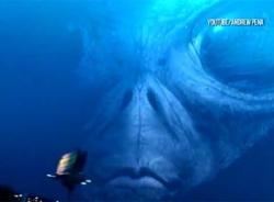 Video UFO tái xuất trên bầu trời Mỹ