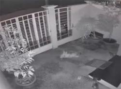 Video dùng súng điện trộm chó trong đêm