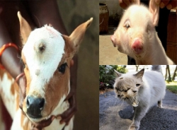 Những động vật có 3 mắt kỳ quái