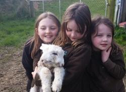Cừu con 2 mặt được nhận nuôi làm thú cưng