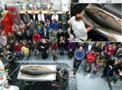 Cá ngừ va trị giá hàng chục tỷ đồng dạt vào bờ biển Anh