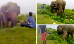'Thót tim' khi xem chàng say xỉn rỡn voi rừng