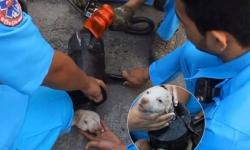 Nghẹt thở xem cứu chú cún kẹt trong ống nước