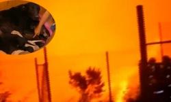 Chó mẹ siêu phàm cứu 9 con khỏi cháy rừng