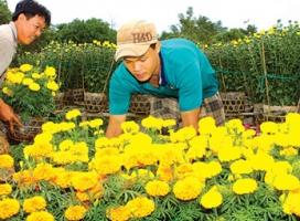 Nông dân Đồng bằng sông Cửu Long đón tết sung túc