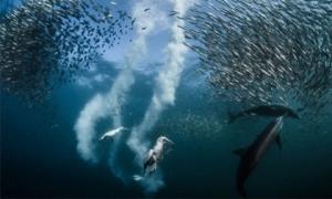 Chiêm ngưỡng 10 bức ảnh đẹp nhất trong cuộc thi 'Nhiếp ảnh gia thiên nhiên của năm'