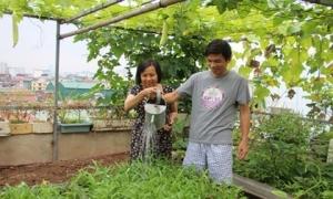 'Soái ca' Hà thành chiều vợ, phá mái tôn để trồng rau, nuôi gà