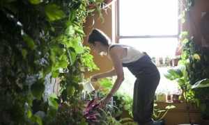 """""""Nông dân"""" phố xinh đẹp trồng 160 loại rau, quả khắp nhà rộng 120m2"""