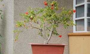 Sai lầm trong phong thủy khi trồng cây bạn phải tránh, để không làm hao tài tốn của, gia đình bất hoà