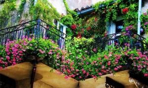 Những ban-công ngập tràn sắc màu thiên nhiên