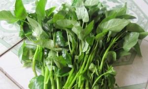 5 loại rau quen thuộc nếu chế biến không đúng cách khiến sán bã trầu làm ổ trong ruột, cơ thể nhiễm độc