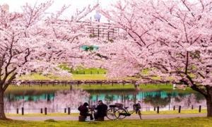 Phong cảnh mùa xuân đẹp rực rỡ ở khắp nơi trên thế giới