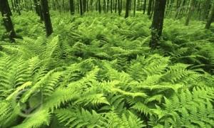 Khỏe mạnh và sống lâu hơn nếu như bạn biết tác dụng của loài cây quen thuộc này