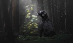 Những bức ảnh chó đẹp nhất năm 2018 - Người bạn tốt của loài người được vinh danh