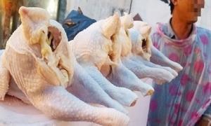 90.000 tấn thịt gà nhập về Việt Nam giá rẻ bèo 23.000 đồng/kg
