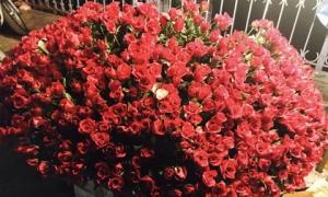 30 phút bán ngàn bông hồng: Giá tăng gấp 3, vì tình yêu không tiếc