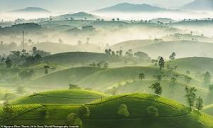 Đồi chè Việt Nam đẹp ngất ngây trong cuộc thi ảnh thế giới