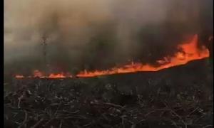 Nắng nóng đổ lửa, cháy rừng liên tiếp ở TT-Huế