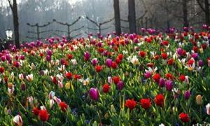 """Vẻ đẹp mê hoặc của """"khu vườn cổ tích"""" Keukenhof tại Hà Lan"""