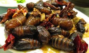 6 loại côn trùng có độ an toàn cao nhất cho người ăn