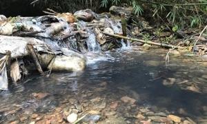 """Vụ nước Sông Đà bị ô nhiễm: Kẻ """"đầu độc"""" nguồn nước đối mặt hình phạt nào?"""