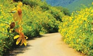 Tháng 11 nhất định không được bỏ lỡ 3 địa điểm du lịch ngập trong sắc hoa này